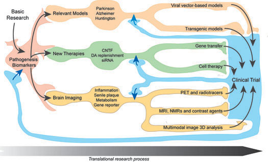 translational-research-site-web-taille5.jpg
